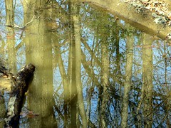 Woods Reflected (danieljsf) Tags: reflection water mississippi woods thechallengefactory