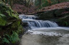 Fern Gulley (Tim Melling) Tags: wood west waterfall stones yorkshire cascade shepley timmelling