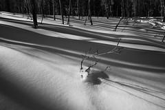 Breaking Through (ashergrey) Tags: bear county winter light shadow bw white snow black cold river utah lodge summit