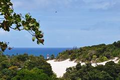 31 de Janeiro... bfds prá vc! (Ruby Augusto) Tags: lighthouse bird sand branches dune salvadorba oceanoatlânticoatlanticocean