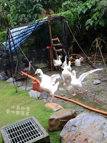 水鳥印象030.jpg