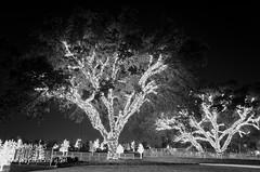 VitruvianPark-16 (projectidentifyphoto) Tags: christmas nightphotography bridge trees music cold reflection water lights nikon nightshot awesome christmaslights nighttime addison raywatkins d5100 vitruvianpark