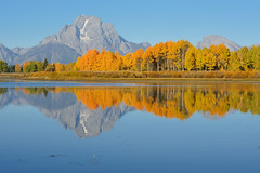 Oxbow Bend (bhophotos) Tags: travel blue autumn trees usa mountain reflection nature yellow river landscape geotagged gold nikon day clear valley snakeriver wyoming tetons grandtetonnationalpark gtnp oxbowbend mtmoran 80200mmf28dnew d700 projectweather
