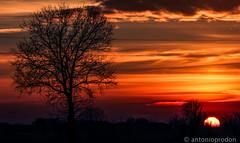 A foggy day (AntonioProdon) Tags: panorama alberi tramonto nuvole day blu foggy case cielo sole terra nebbia inverno rosso rossi paesaggio arancione paese