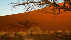 Sossusvlei dune sunset (Wanda Amos@Old Bar) Tags: sunset shadow desert namibia sossusvlei