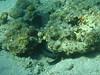IMG_0395 (acmt2001) Tags: sea fish coral underwater אילת redsea scuba diving reef eilat ים דג ריף אלמוג צלילה אתגרים תתימי יםאדום