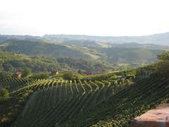 Italy Piedmont - Neive Paitin Vineyards 4 - 07-07 (Wine On The Road) Tags: road trip tour wine ben visit scene vin behind win piedmont weinberg piemont luxur unfin unfilter