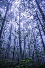 A life journey... (jaegemt1) Tags: fog forest virginia woods dream va dreamy wonderland blueridgeparkway petitesgap jaegemt1 vision:outdoor=099 vision:sky=0805