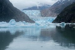_MG_4971a (markbyzewski) Tags: alaska ugly iceberg tracyarm southsawyerglacier