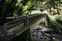 (bamboolizer) Tags: bridge nikon taiwan brook d800 manuallens tiltshiftlens bwcpl 24mmf35pce bwnd64 newtaipeicity