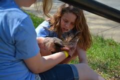 D71_3743 (City Church Charlotte Photos) Tags: pig community sunday pickin 4514