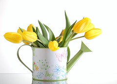 Think Spring! (Karen_Chappell) Tags: stilllife white flower green floral yellow spring tulip decor planter wateringcan
