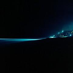 (patrickjoust) Tags: ocean county sea usa color 120 6x6 tlr film beach water night analog america square lens lights coast us reflex focus long exposure glow mechanical florida united release tripod north patrick twin cable palm atlantic negative medium format fl states hotels manual grainy 55 expired joust estados c41 filmphotography unidos kodakportra800 lakeworth originalphotography mamiyac330s autaut sekor55mmf45 patrickjoust photographersontumblr