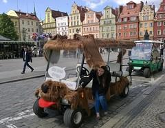 Wroclaw_dog goes around :) (Body_WRO) Tags: street city tourism smile town humor poland wroclaw wrocaw breslau