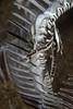 Living on the Crinoid (PacificKlaus) Tags: ocean macro underwater philippines scuba diving negros marinelife coevolution dauin crinoid commensalism crinoidshrimp allogalatheaelegans periclimenes crinoidsquatlobster