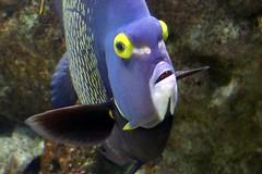Aquarium de Paris  (14) (Mhln) Tags: paris aquarium requin poisson trocadero poissons meduse 2015 cineaqua