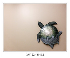 Day 22 - Shell (purplefrog7777) Tags: blue green wall turtle shell worth1000 purplefrog 30day