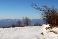 havas hegyvonulat / snowy mountain range (debreczeniemoke) Tags: winter snow mountains hegy gutin hó tél hegyek canonpowershotsx20is gutinhegység munţiigutâi munţiigutin gutinmountains