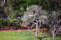 infinite plausibility (Rodrigo Alceu Baliza) Tags: tree nature sigma infinite t5i plausibility