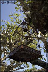 Jardn (Mar Santorio) Tags: bird d50 nikon vietnam hoian pajaro saigon