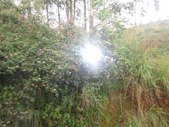 Munnar 118.JPG (invisibleindian2001) Tags: munnar