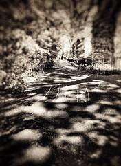 (Matt Brock ) Tags: trees blur london church monochrome sepia path grain hopscotch vignette hdr atmospheric stjohnswood mobilephotography iphoneography