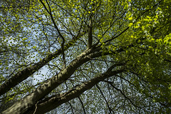 Branches and Shadows Sherrards Wood - April 2016 (GOR44Photographic@Gmail.com) Tags: wood trees tree green woods shadows fujifilm wgc xpro1 sherrards 18mmf2 gor44