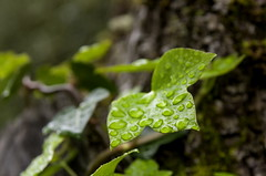 _FEL7782IIIp (Flix Prez Antn) Tags: naturaleza pentax alava euskadi k5 pasvasco santacatalina