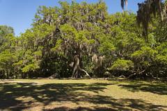 DUC_6749r (crobart) Tags: park tree creek oak state florida live fairchild bulow