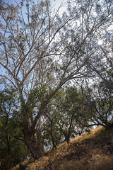 Park Work Day  - 5/14/16 (TreePeople) Tags: park work weed day canyon trail maintenance volunteer removal mulch weeding coldwater treepeople