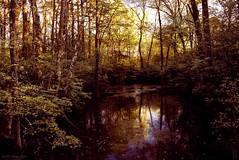 still water (tom bourdot) Tags: trees light lake nature water rural creek forest outside mirror spring still pond woods hiking walk branches may nj gimp surreal nikkor refuge nikond5300
