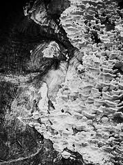 Champignons sur un tronc d'arbre, mont Beuvray (Matthias Rabiller) Tags: