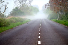 The fog and the rabbits. (pstone646) Tags: road nature weather animals fog fauna vanishingpoint kent flora earlymorning rabbits