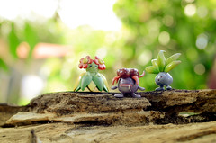 Cheering Up Gloom (Ely Squid) Tags: nature toys photography bokeh philippines pokemon gloom tomy oddish toyphotography bellossom pokemonphotography itsmorefuninthephilippines pokemongo pokemon20 pokemonphilippines