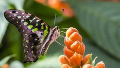 Freedom (Danny VB) Tags: portrait flower macro colors closeup canon butterfly freedom march spring colours papillon 6d jardinbotanique