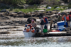 Breaking into Birding (Laura Erickson) Tags: maine places harborisland lincolncounty
