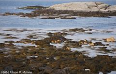 Sachuest NWR (A.Maltese) Tags: ocean seascape seaweed nature rocks rhodeisland lowtide sachuestnwr