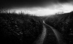 Along these winding roads (David Haughton) Tags: morning blackandwhite bw monochrome sunrise landscape mono track moody path country dream devon lane mysterious winding petertavy