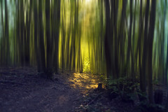 Mystical forest (klepher) Tags: blue trees light sunset summer sun sunlight france tree green nature yellow forest mood couleurs colorfull magic magical rocher landcape ambiance powerfull dautureyre