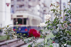 Rose and Tram (xperiane (Extremely busy)) Tags: film japan tokyo fuji 100 toden   pentaxmzl