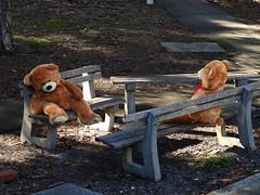 Diamond Valley Railway and a teddy bears picnic (Lesley A Butler) Tags: australia melbourne victoria eltham miniturerailway diamondvalleyrailway