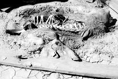 Carcass (klewisphotoventures) Tags: california abandoned grafitti i5 100 mendota mobilehome carcass abandonedamerica thelostcauses
