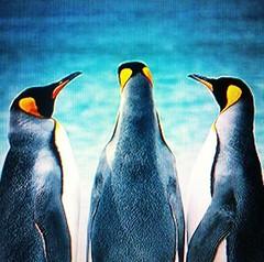 Penguin Chat (Sascha Grabow) Tags: family animal animals poster penguin penguins tiere chat surreal antarctica heads southgeorgia truelove pinguin plakat tier antarctic pinguine tierfotografie antarktis animallovers sdgeorgien ewigetreue saschagrabow tierphotografie shackletonsworld liebeuntertieren