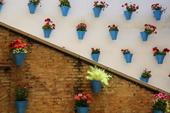 Cordoba (HDH.Lucas) Tags: street flower spain lucas espana cordoba flowerpot andalusia