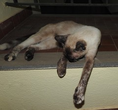 Sorrento cat (swallowedtail) Tags: italy cat sorrento santagata