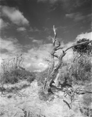 A known place (Mark Dries) Tags: wanderlust 4x5 rodinal largeformat 400iso schneiderkreuznach orangefilter fomapan 6890 angulon markguitarphoto markdries travelwide