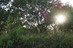 DSC01960 (numb3r) Tags: belize btb belizetourism wildlife rainforest mayan temples jungle belizezoo placencia belizecity authenticbelize tapir tucan