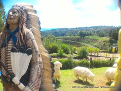 Woman-In-Digital-Dahilayan-Forest-Park-Bukidnon-006 (livingMarjorney) Tags: travels touristspot mindanao bukidnon dahilayanforestpark livingmarjorney womanindigital