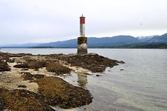 Red and White lighthouse 3 (Tynan Phillips) Tags: ocean sea sky lighthouse mountain seascape canada mountains seaweed reflection beach reflections landscape landscapes nikon bc britishcolumbia canadian denmanisland dslr d90 oceanscape nikond90