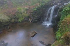 Parque Natural de #Gorbeia #Orozko #DePaseoConLarri #Flickr - -649 (Jose Asensio Larrinaga (Larri) Larri1276) Tags: 2016 parquenaturaldegorbeiagorbea parquenaturaldegorbeia gorbeia orozko bizkaia basquecountry eh euskalherria naturaleza airelibre paisaje cascada agua arroyo corrientedeagua